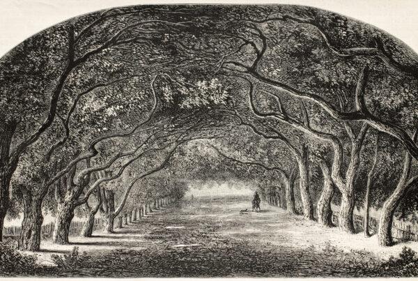 Vieille illustration de marche en châtaignier. Créé par De Bar et Cosson-Smeeton, après la tablette de Rousseau dans la galerie Khalil-Bey. Publié sur L'Illustration, Journal Universel, Paris, 1868